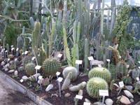 serre des plantes de milieu aride